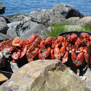 Clambake with lobsters